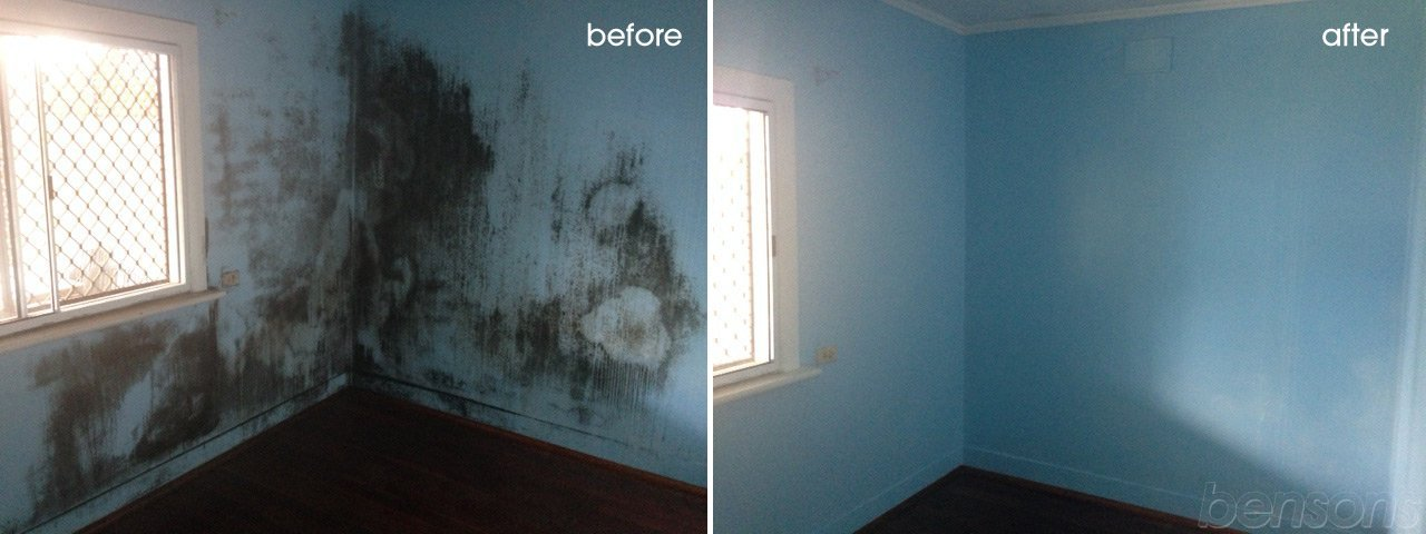 Adelaide Mould Removal Goldmorr Mould Cleaning Services
