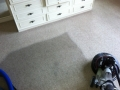 Carpet Cleaning in Adelaide 360i in Progress